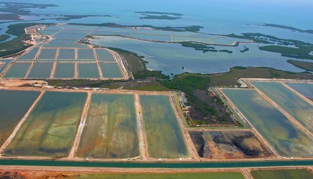 One of the biggest threats to wildlife is the destruction of land to make room for the rapidly expanding fish aquaculture.