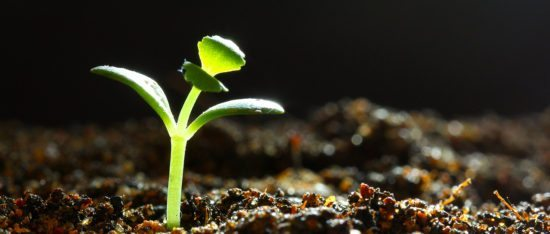 growth-addiction_seedling-gorwing_blog-header1280_credit-shutterstock-KYTan