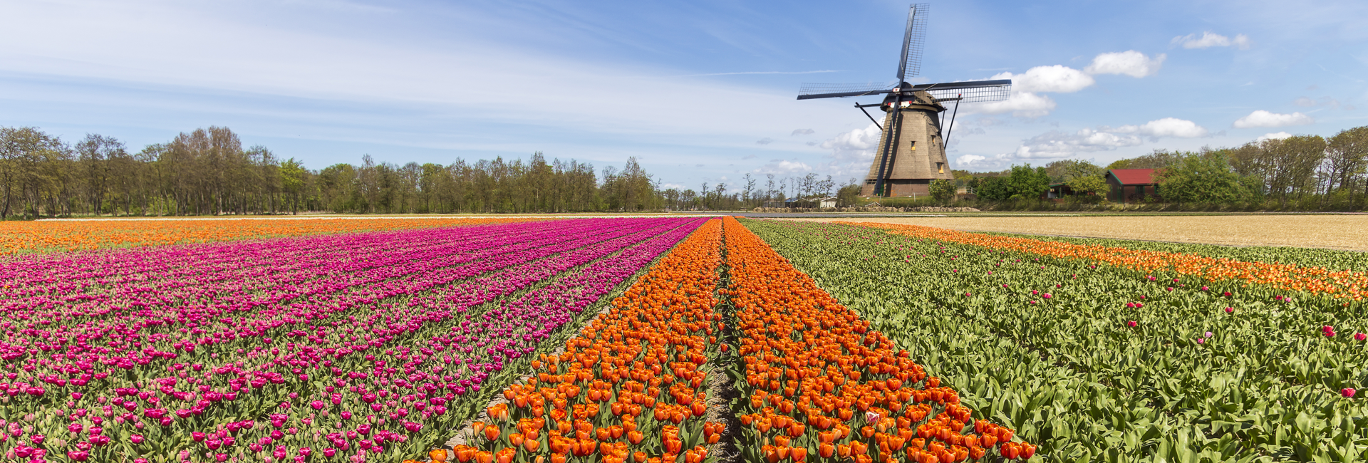 Picture of The Netherlands Awaits You!