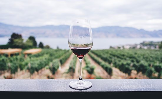 diets that work glass of wine overlooking vineyard
